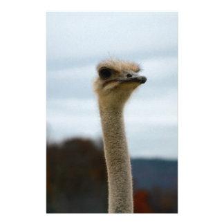 Silly Bird Photo Ostrich Face Head Closeup Stationery
