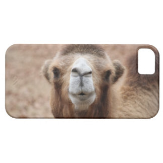 Silly Camel iPhone 5 Covers