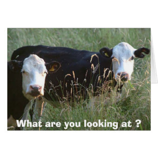silly cows card