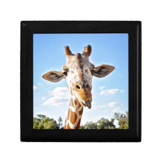 Silly Giraffe Gift Box