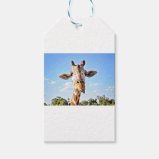 Silly Giraffe Gift Tags