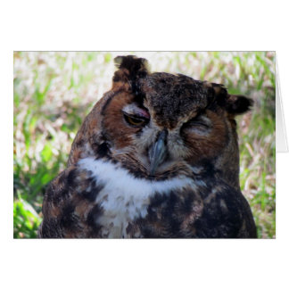 Silly Owl Greeting Card