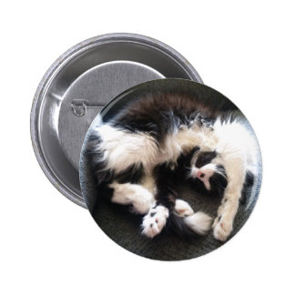 silly sleepy cat pinback buttons
