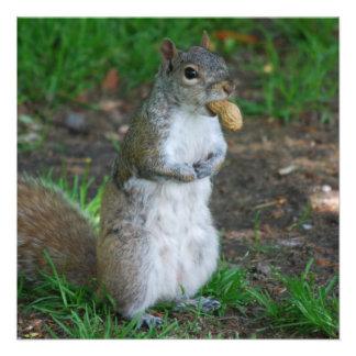 Silly Squirrel Custom Invitation