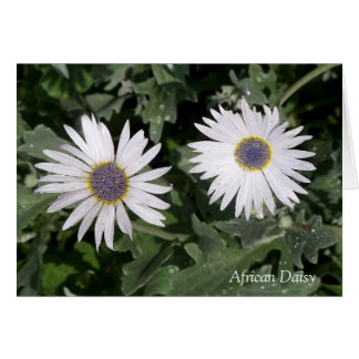 Silver African Daisy ❝There is a Flower❞ Quotation Greeting Card