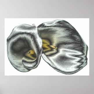 Silver Arum Lilies Print