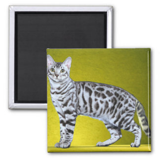 Silver Bengal Stamp Square Magnet