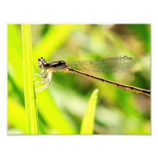 Silver Bug Photographic Print