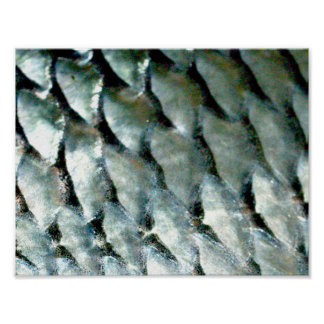 Silver Carp Fish Scales | Poster