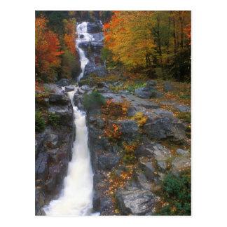 Silver Cascade Autumn Postcard