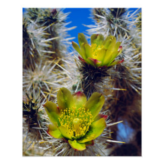Silver Cholla Cactus Wildflowers Poster