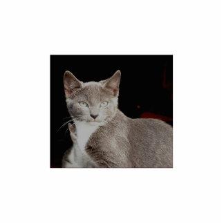 Silver - Feral Cat Photo Sculpture