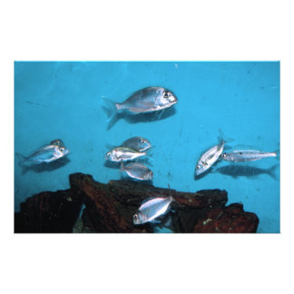 Silver fish customized stationery