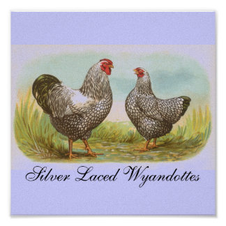 Silver Laced Wyandottes Print