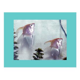 Silver Pearl Angelfish Postcard