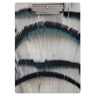 Silver Pheasant feathers Clipboard