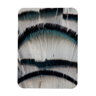 Silver Pheasant feathers Magnet