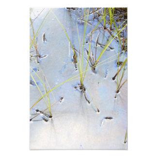 Silver pond photograph