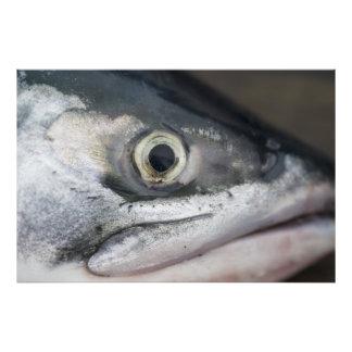 Silver Salmon Face Photographic Print