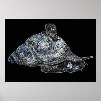 Silver Snail Print
