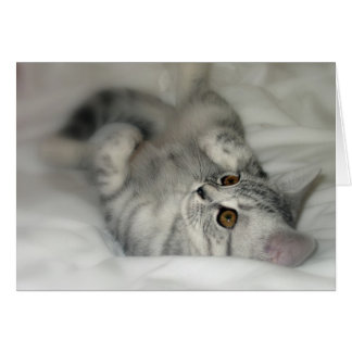 Silver Spotted Kitten Greeting Card