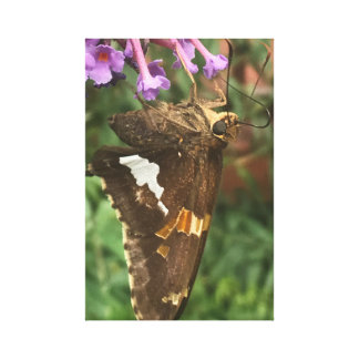 Silver Spotted Skipper on Stretched Canvas