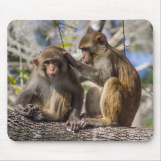 Silver Springs Monkeys Mouse Pad