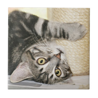 Silver tabby cat face tile