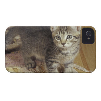 Silver tabby kitten, eight weeks old iPhone 4 cases