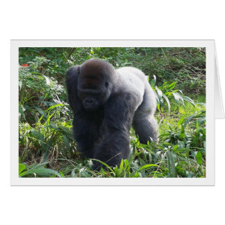 Silverback on the Move Card