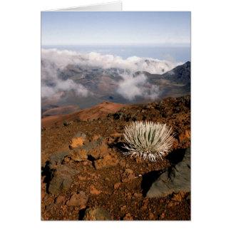 Silversword on Haleakala Crater  Rim from near 3 Card