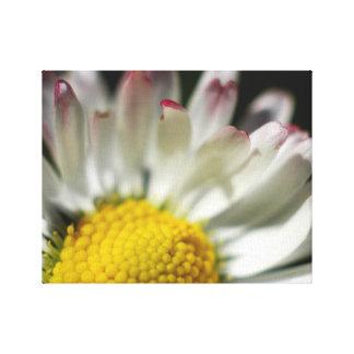 Simple Daisy Canvas Prints