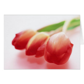 Simple Red Tulips All Ocassions Greeting Card