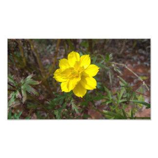 Simple yellow flower photo print