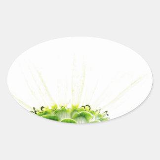Simplistic White Zinnia Oval Sticker