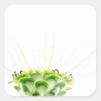 Simplistic White Zinnia Square Sticker