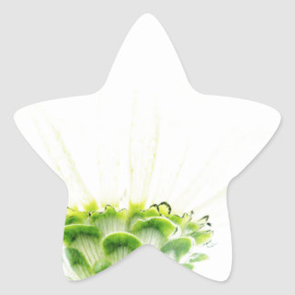 Simplistic White Zinnia Star Sticker