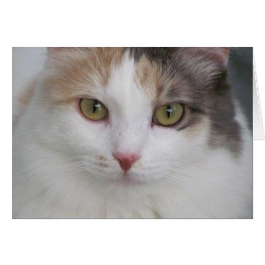 Simply Beautiful! Summer, The Cat Card