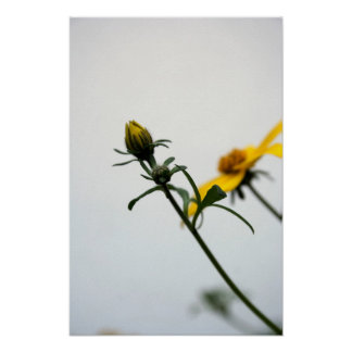 Simply... Floral Photography - Minimalism Print