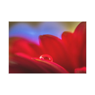 Simply Put a macro pic water droplet on daisy Canvas Print