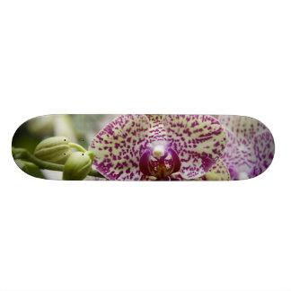 Singapore (Sanskrit for Lion City). National 21.6 Cm Skateboard Deck