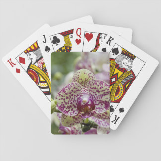 Singapore (Sanskrit for Lion City). National Poker Cards