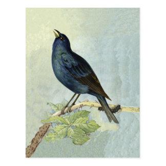 Singing Blackbird Watercolor PostCard