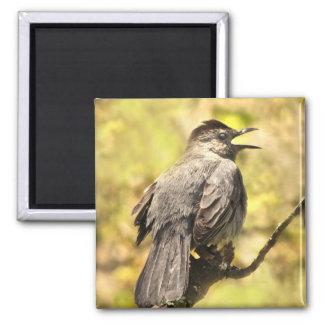 Singing Gray Catbird Magnet