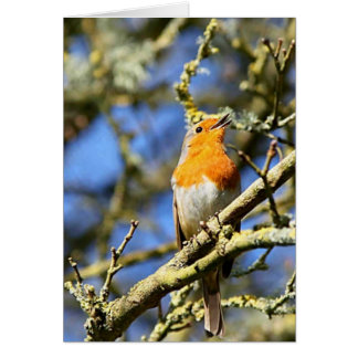 Singing Robin, Stourhead Card