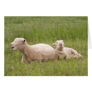 Singing Sheep Card