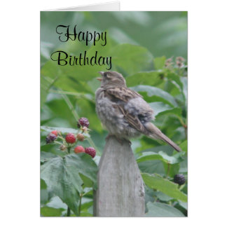 Singing sparrow card