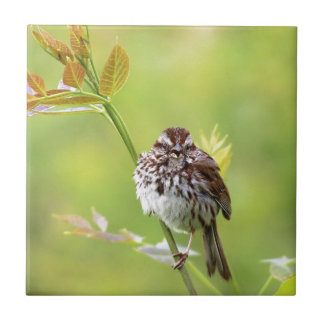 Singing Sparrow Ceramic Tile