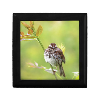 Singing Sparrow Gift Box