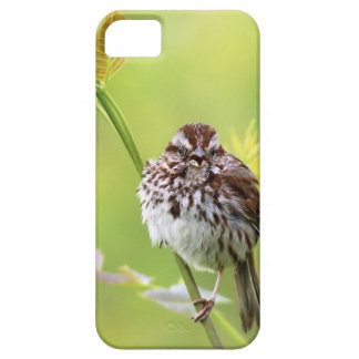Singing Sparrow iPhone 5 Cover